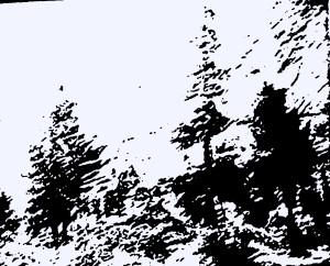 Лесной мотив P1100339